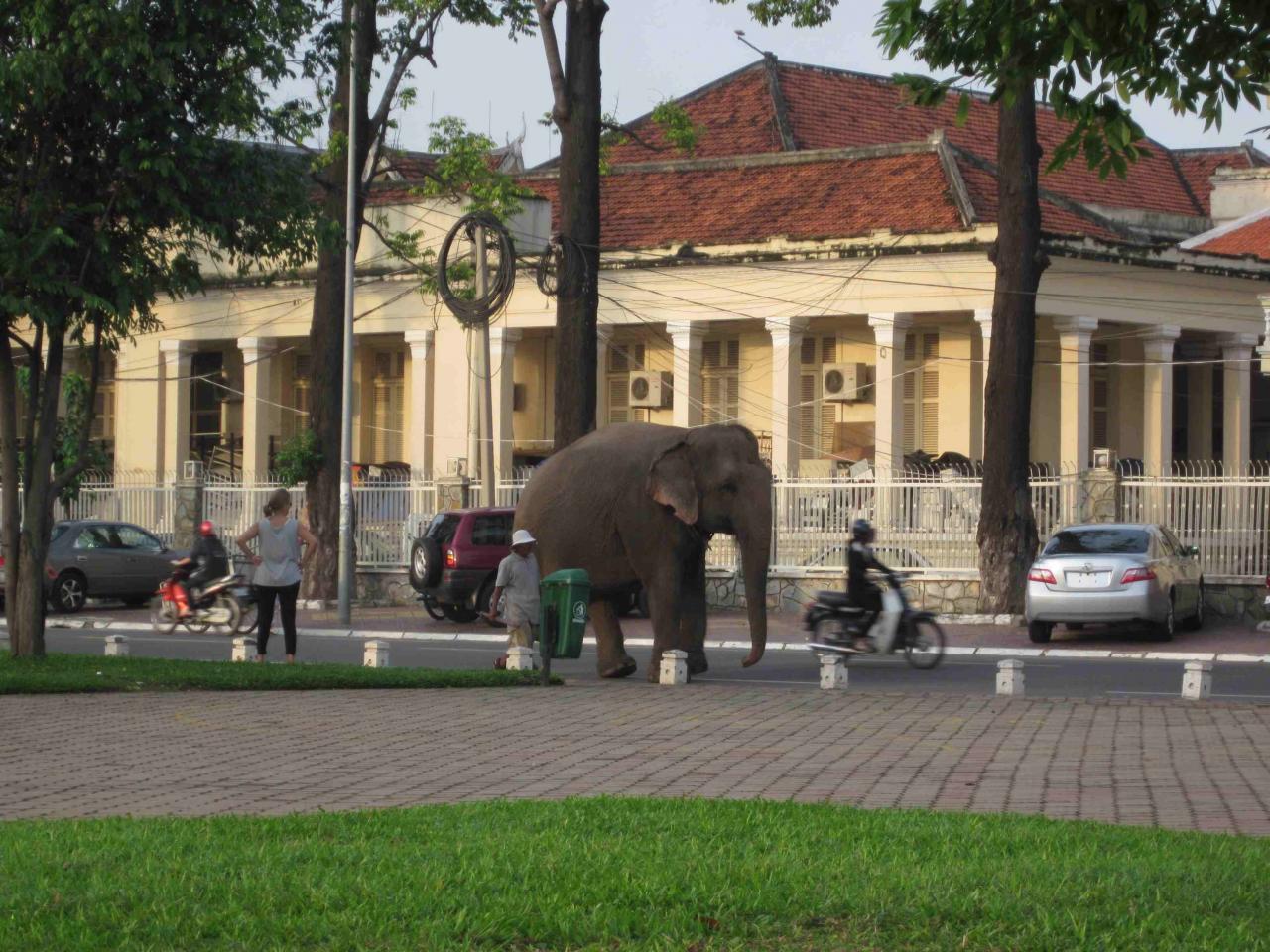 Elephant Phnom Penh